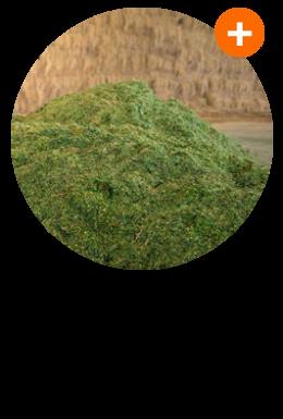 K10-ไร่หญ้านาเปียw
