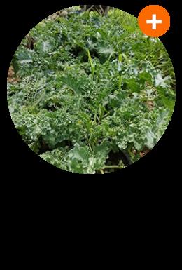 K15-Organic Vegetable-(ขวาน)
